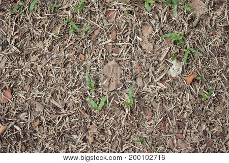 Dry leaves on dry grass in autumn.