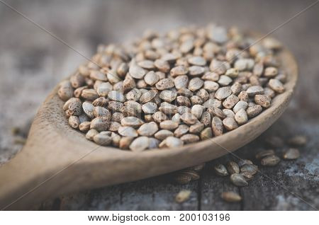 Seeds of Cannabis or hemp in a wooden spoon