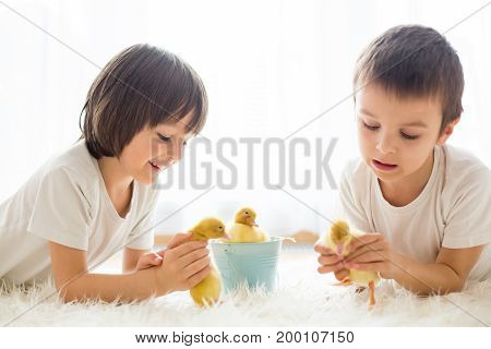 Cute Little Children, Boy Brothers, Playing With Ducklings Springtime