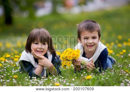 Sweet Children, Boys, Gathering Dandelions And Daisy Flowers