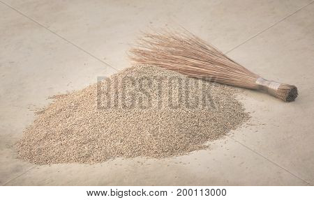 Newly harvested paddy seeds in Indian subcontinent