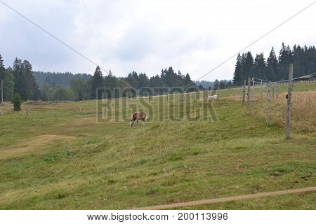 Nature Šumava, horse breeding, silence, calmness, charm, deep forests - all this invites you to relax