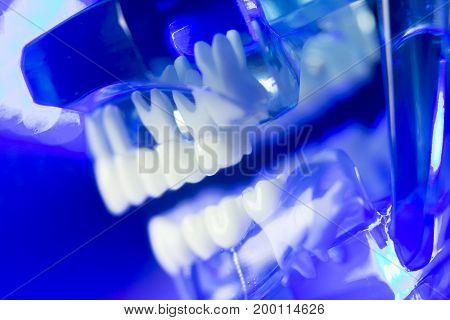 Dental Teeth Clinical Model