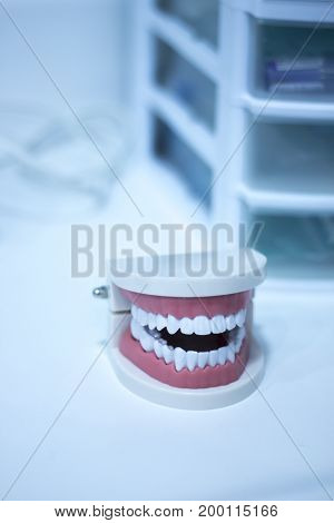 Dental Office Teeth Model
