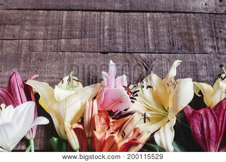 Spring Background, Flowers Top View. Beautiful Colorful Lily Flower On Rustic Wooden Background. Gor