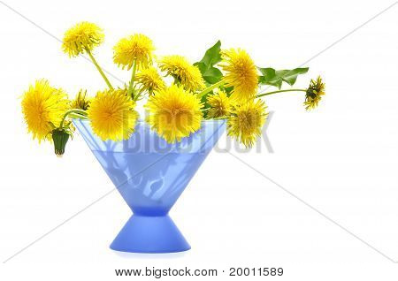 Dandelions  On The White Isolated Background