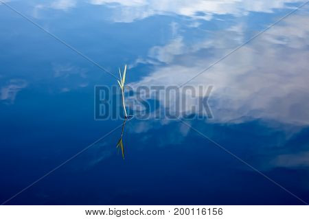 Surface of water with reflection of the sky and grass blade. Abstraction for a relaxation