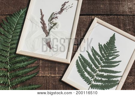 Rustic Boutonniere And Fern Leaf Under Glass In Frame On Wooden Rustic Background With Fern Leaves.
