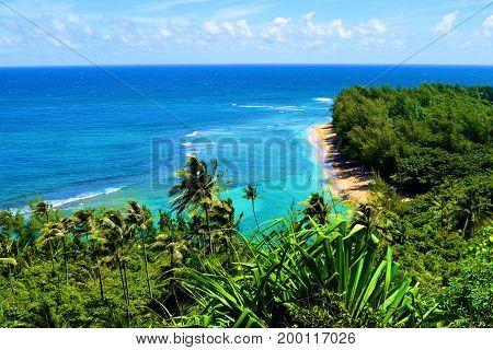Tropical forest surrounding Kee Beach taken in Kauai, HI