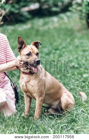 Friendly Owner Petting Dog Outdoors While On A Walk In The Park, Hapyp Dog Playing With Human , Anim