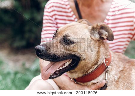 Happy Dog Portait, Woman Hugging Cute Mongrel Dog Outdoors, Big Eyed Puppy Posing With Tongue Out, A
