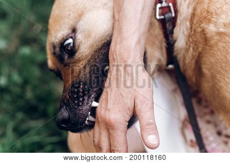 Friendly Owner Playing With Dog, Emotional Dog Pretending To Bite Hand Close-up, Animal Adoption Con