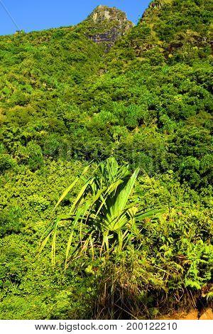 Lush green plants surrounding rugged mountains taken in rural Kauai, HI