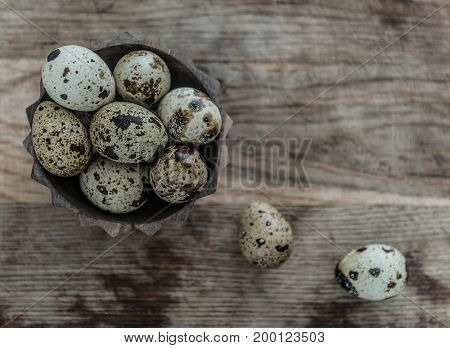 tiny quail eggs with brown spots, topview