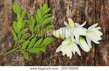 Medicinal moringa flower with green leaves in timber surface