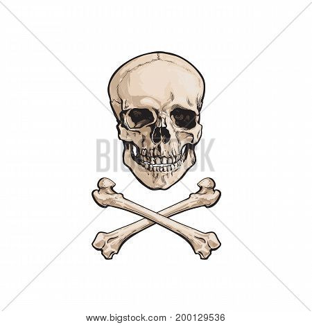 vector cartoon skull and cross bones isolated illustration on a white background. Jolly roger flag, pirates adventure , treasure risk and death symbol