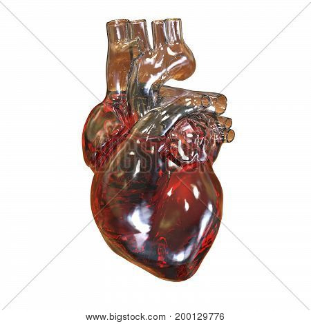 Human heart isolated on white background, 3D illustration
