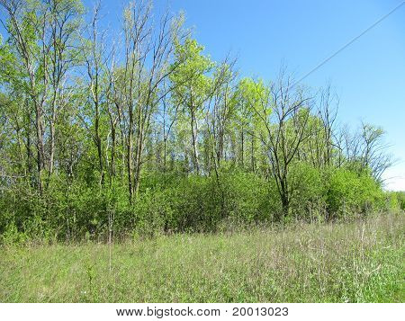 Beautiful green colors of trees in spring against a blue sky background