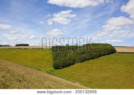 Small Woodland Copse