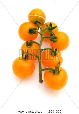 Orange Tomato Tree
