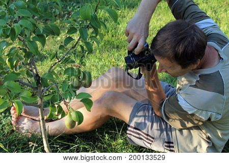 Man sits on grass and photographs pear fruit in garden by digital camera.