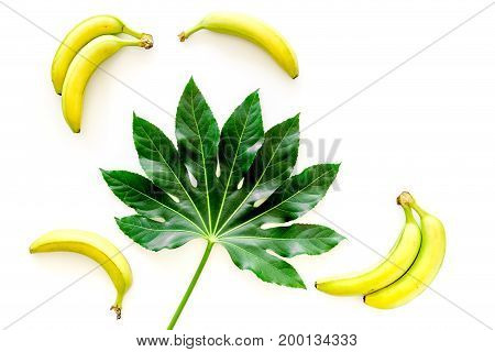 Tropical plants. Huge leaf and bananas on white background top view.