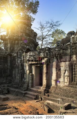 ruins of Ta Prohm temple in Angkor Wat (Siem Reap Cambodia)12th century