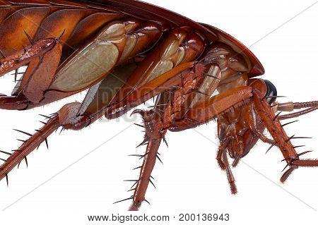 Cockroach bug american roach disgusting creature, close view. 3D rendering