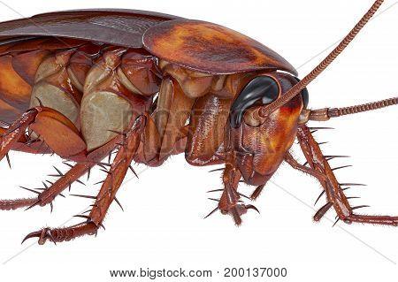 Cockroach bug orange revolting creature, close view. 3D rendering