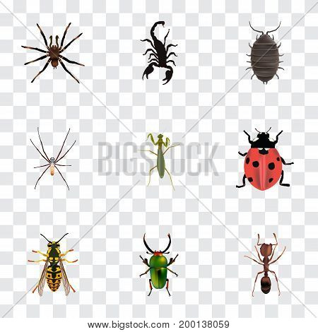 Realistic Arachnid, Poisonous, Ladybird And Other Vector Elements