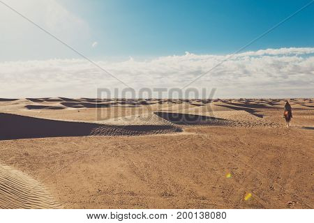 Small sand barkhans with grass at the sunrise. Desert in arab emirates. Big sky view