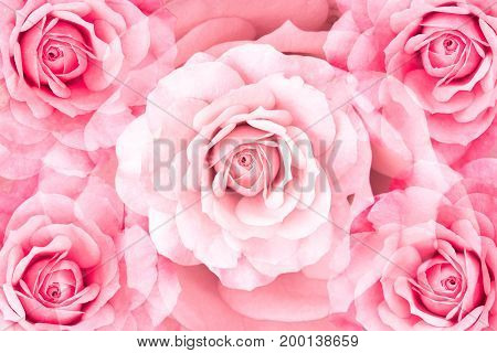 floral background of symmetrical rose flowers in a pattern