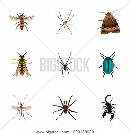 Realistic Arachnid, Poisonous, Bee And Other Vector Elements