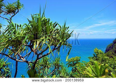 Hala Plants which are native to Hawaii taken at the rugged Napali Coast in Kauai, HI