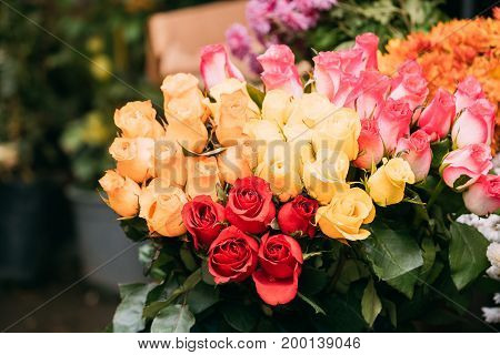 Bouquet Of Beautiful Colorful Roses With Drops Of Water In Market.