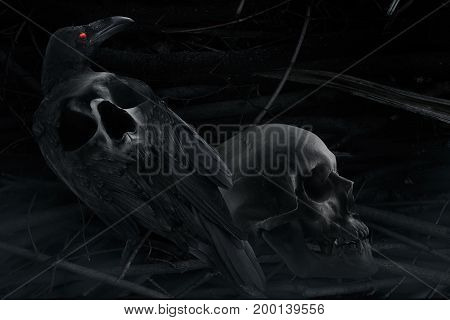 Photo of a black and white black stylized crow with skull image on a back, sitting with human skull close up composition with branch background pattern.