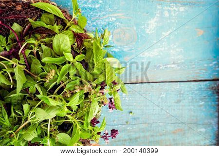 Top View Fresh Organic Bunch Of Green And Purple Basil On The Blue Vintage Wooden Background. Select