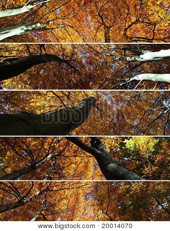 Tree Canopies Collage