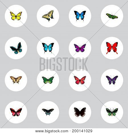 Realistic Purple Monarch, Morpho Hecuba, Tropical Moth And Other Vector Elements