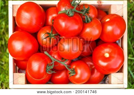 Crop picture of fresh tomato close up