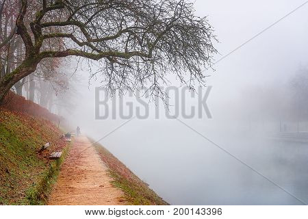 Representative image for a cold autumn day with empty trees and fallen leaves an alley along the Ljubljanica river all surrounded by fog.
