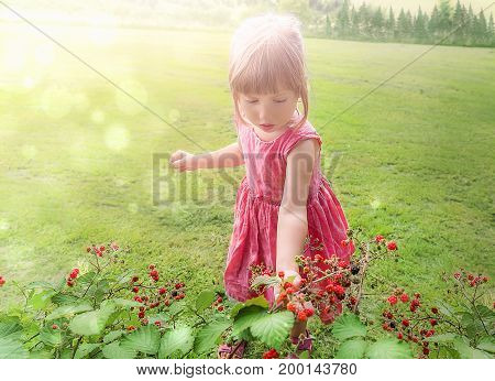 Little girl in a pink dress picking delicious raspberry from a bush while the sun shines over her.