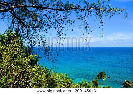 Lush green plants and trees overlooking Kee Beach in Kauai, HI
