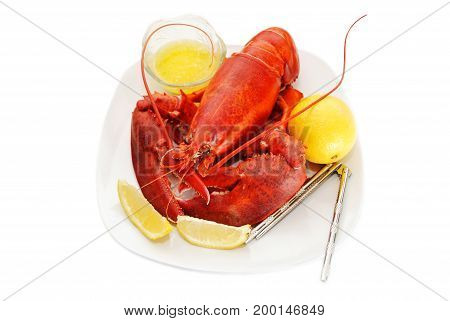 Whole New England Lobster Served with Butter and Lemon