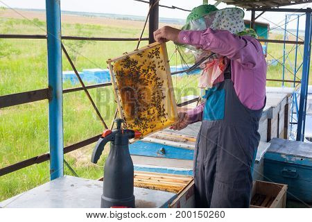 A young beekeeper on a beekeeping apiary checks a frame with bees from a beehive