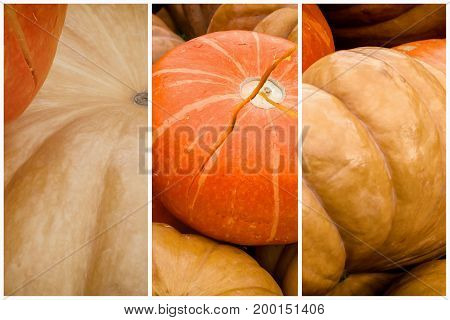 Collage of Pumpkin close-up. Thanksgiving Day and Halloween festive decoration and concept. Autumn, fall background
