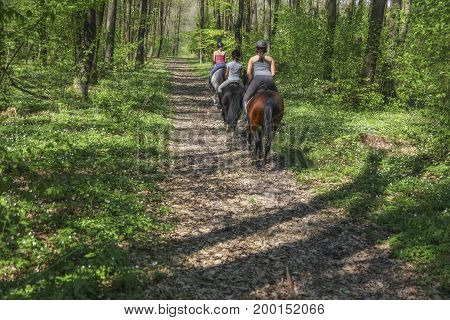 Young girls riding on horseback through the forest