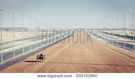 Dubai Camel Racing Club at Al Marmoom, UAE