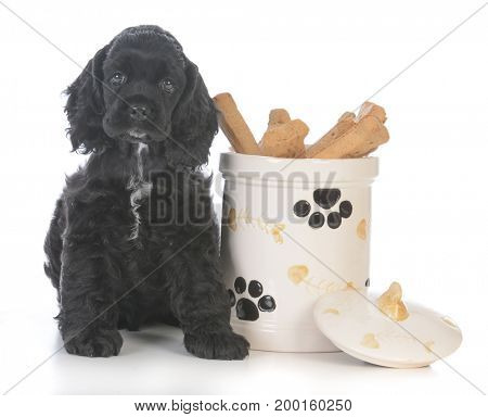 cute puppy sitting beside a cookie jar on white background