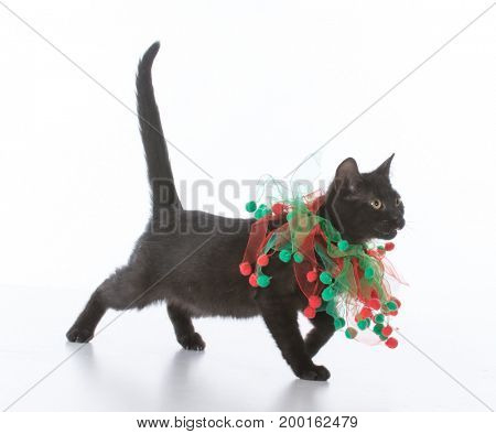 black kitten wearing christmas ornament on neck on white background